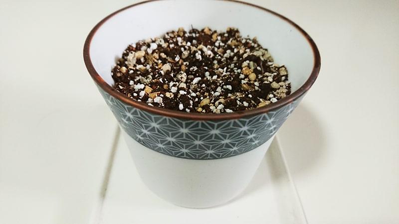 ミニ盆栽 黒松のキットに種まき