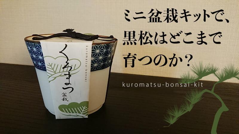 ミニ盆栽 黒松のキットのトップイメージ